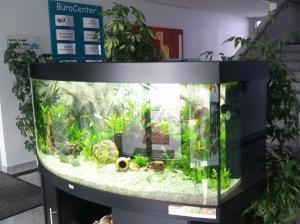 Aquarium im Eingangsbereich vom BüroCenter Wolfratshausen